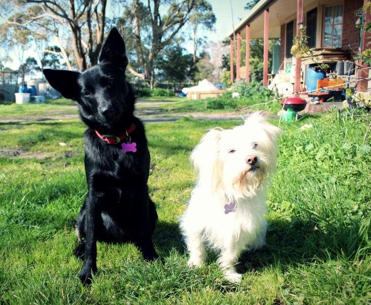 Mollie & Ruby